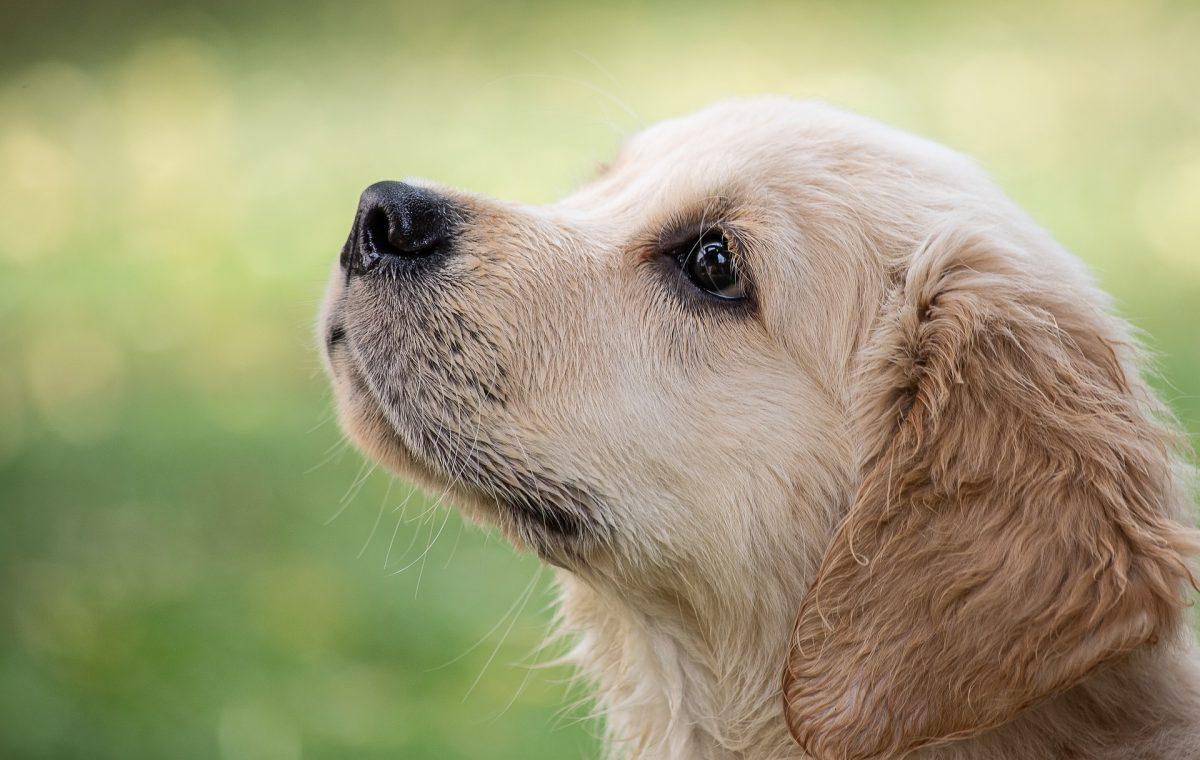 dog-4390885_1920-1200x760.jpg