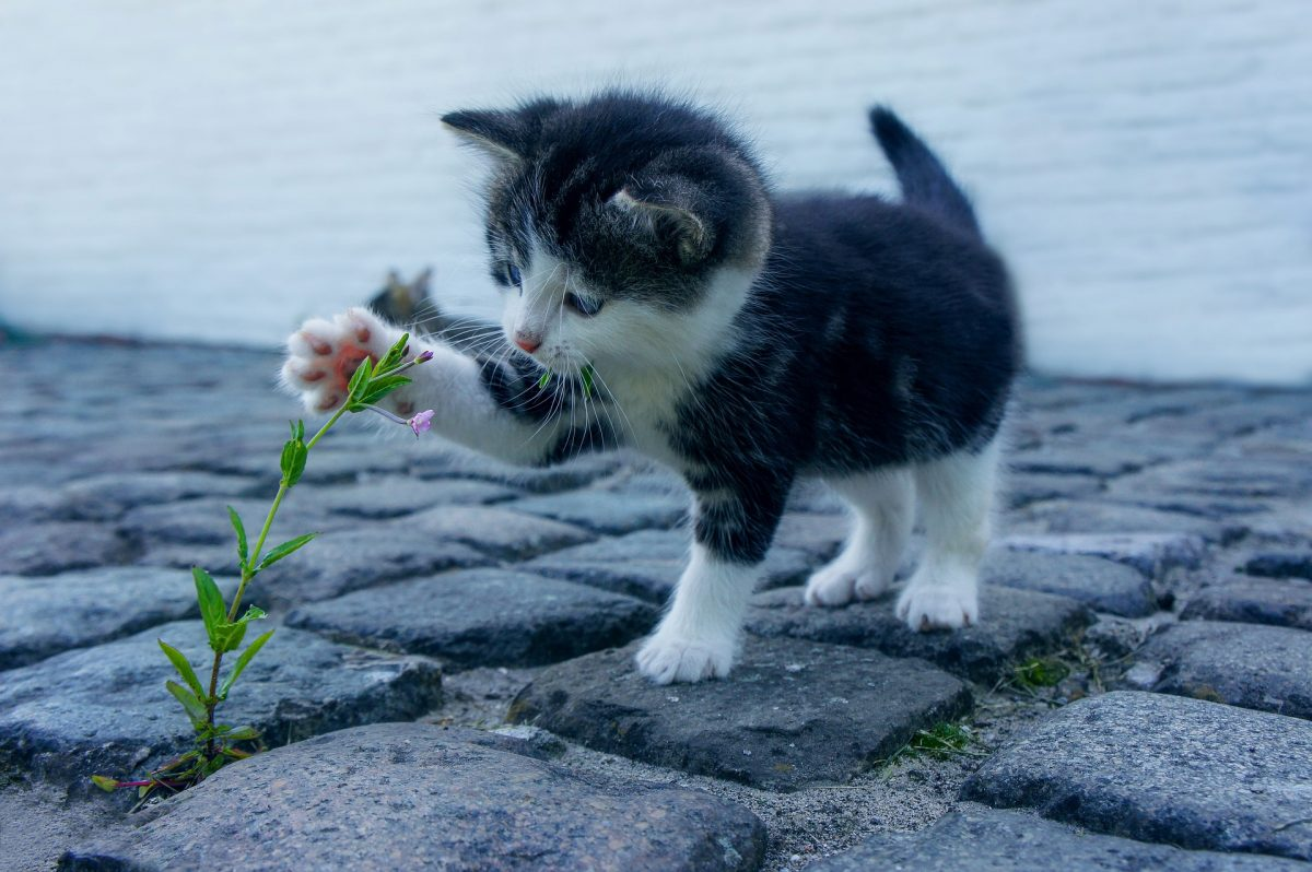 cat-2536662_1920-1200x798.jpg
